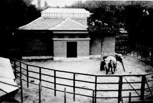 Slonarnica v staria zoopark