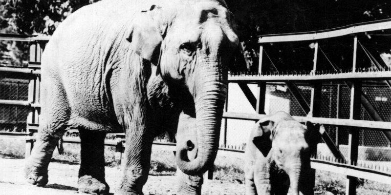 elephant_sofia_zoo